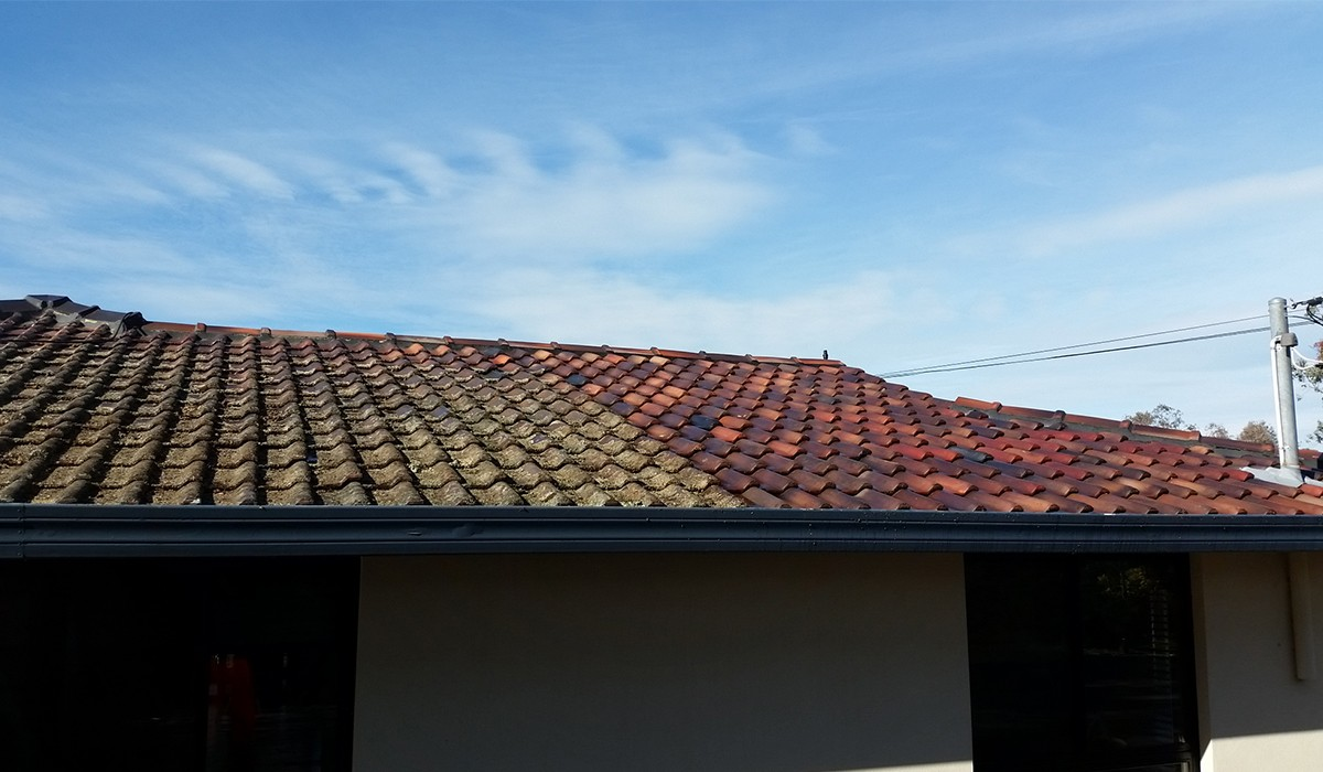 Roof Cleaning7